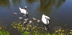 Photo of Grappenhall, Bridgewater Canal, 29th May 2020