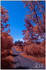 laneway to barn