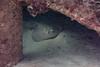 Scuba Dive At Blairgowrie Pier-3