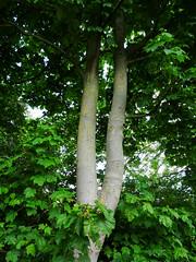 Photo of Tree, 2020 May 17