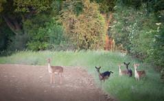 Photo of The Hidden Herd
