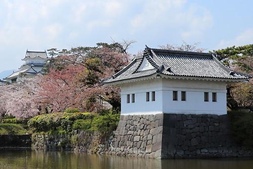 Odawara castles among sakuras