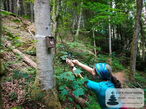 Die Antwort auf die Frage aller Fragen - Felsenwanderweg um Rodalben im Pfälzer Wald