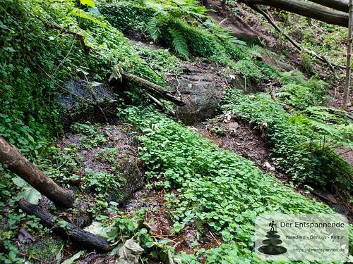 Felsenwanderweg um Rodalben im Pfälzer Wald