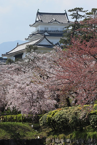 Odawara castle in spring