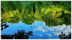 Photo of Reflection
