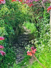 Photo of Dried up village brook makes a lovely footpath