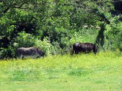 Photo of Donkeys, Leybourne 2020