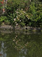 Photo of Coventry Canal: Bridge 5 to Bridge 4