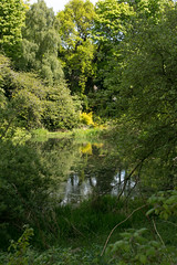 Photo of Pond at Oriel Road