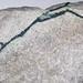 Chalcocite-malachite veins in sandstone (Flagstaff Formation, Paleocene; Salina Canyon, Utah, USA) 3