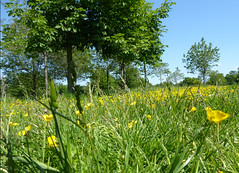 Photo of Field of yellow