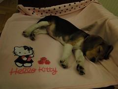 Kitty 02.2010