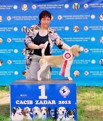 Lucky , Zadar 212
