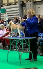 Lucky, Crufts 19