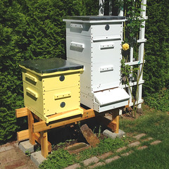 langstroth_hives