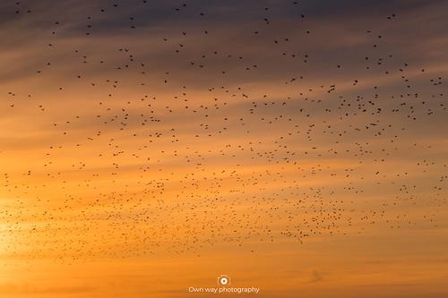 Birds... lots of birds...