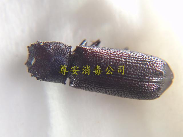 DSC01838(1)