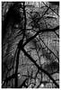 TA - shadow on tree, Hatchbank Road