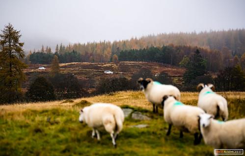 Landrover Experience Schotland