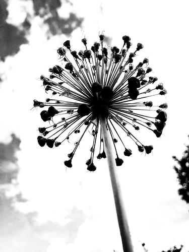 Corona days, From FlickrPhotos