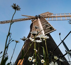 Holgate Windmill, May 2020 - 10
