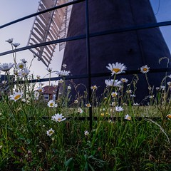Holgate Windmill, May 2020 - 12