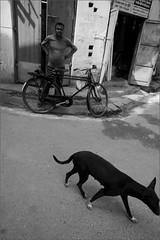 stray dog, kolkata