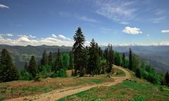Forest edge at Gomismta-Shuakhevi Mountain Trail, Ajaria, Georgia