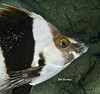 Magpie Perch.