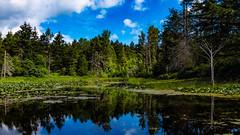 Beaver Lake Ponds