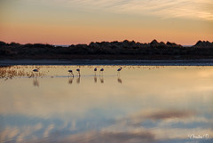 """camargue_2007-DSC5242 • <a style=""""font-size:0.8em;"""" href=""""http://www.flickr.com/photos/161151931@N05/49985174677/"""" target=""""_blank"""">View on Flickr</a>"""