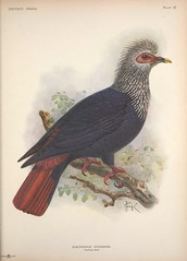 Anglų lietuvių žodynas. Žodis class aves reiškia klasė aves lietuviškai.