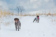 Murphy & Maisie Snowy Day