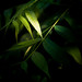 A Plant in the Darkness