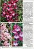 Люблю цветы № 3 март 2020