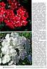 Люблю цветы № 4 апрель 2020