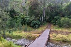 Crossing Three Moon Creek