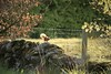 Red squirrel action shot