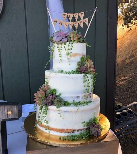 Cakes Chubby Cheek Cakes-84