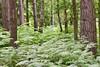Gamlingay Wood