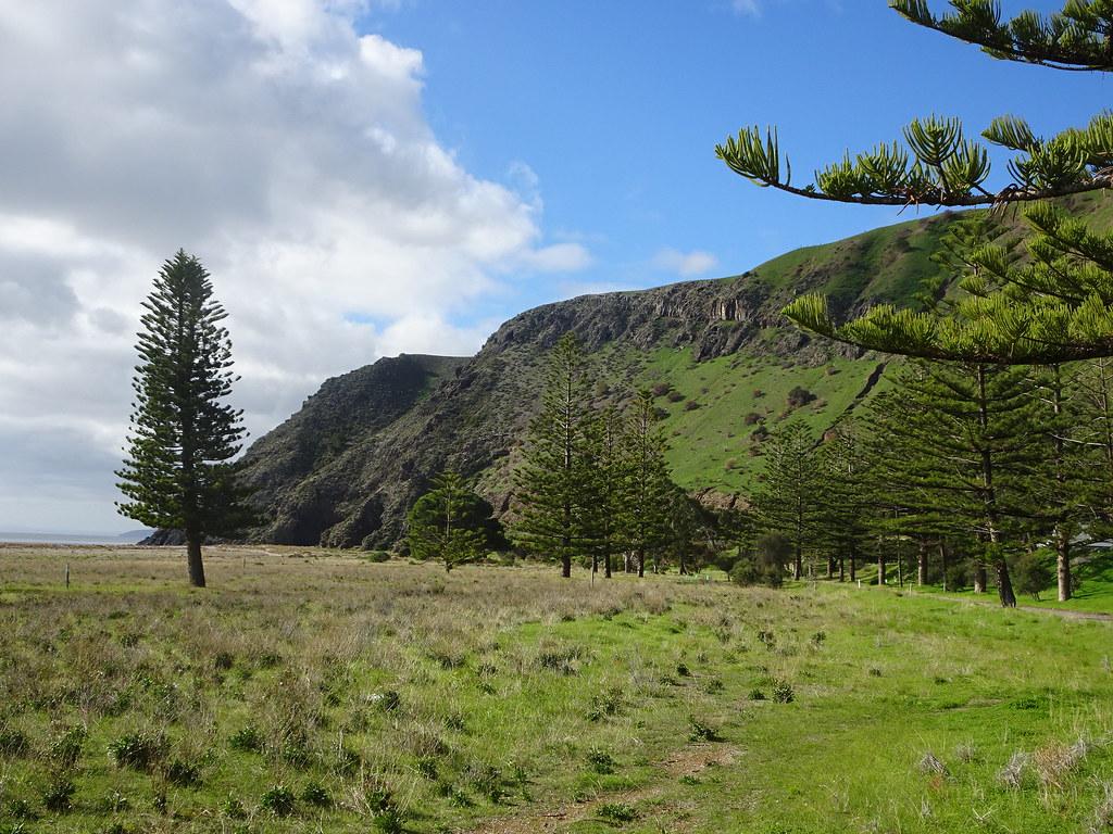 Rapid Bay on Fleurieu Peninsula. Norfolk Island pines.