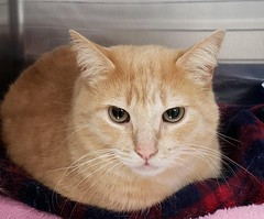 Simbie - 3 year old neutered male