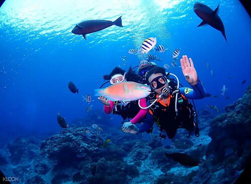 (圖3)潛入綠島水域,探索色彩斑斕的奇異珊瑚與不畏生的鮮豔魚群
