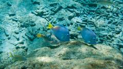 Fish at Playa Grandi
