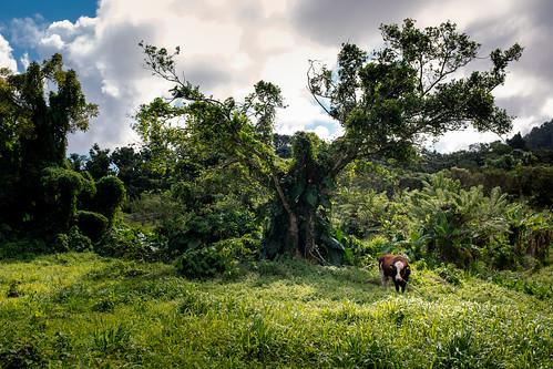 Route de l'Habituee, Basse-Terre, Guadeloupe