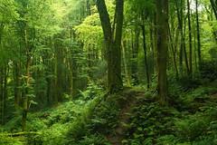 Photo of Verdant woodland