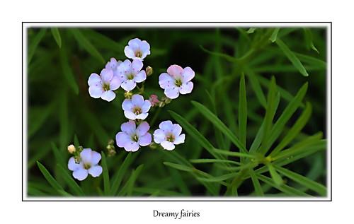 Dreamly blossoms…*
