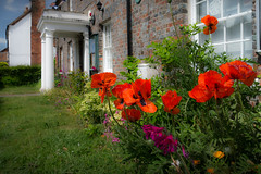 "Gareth's Photo of the Week 21 ""Poppies"""