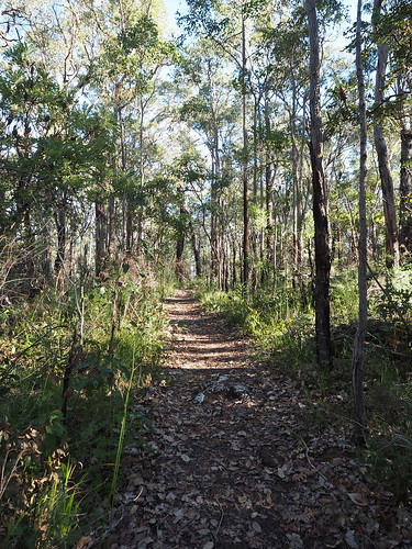 Afternoon Light in Woodland at Winter Solstice - Mt Lindesay Track, Denmark, Western Australia
